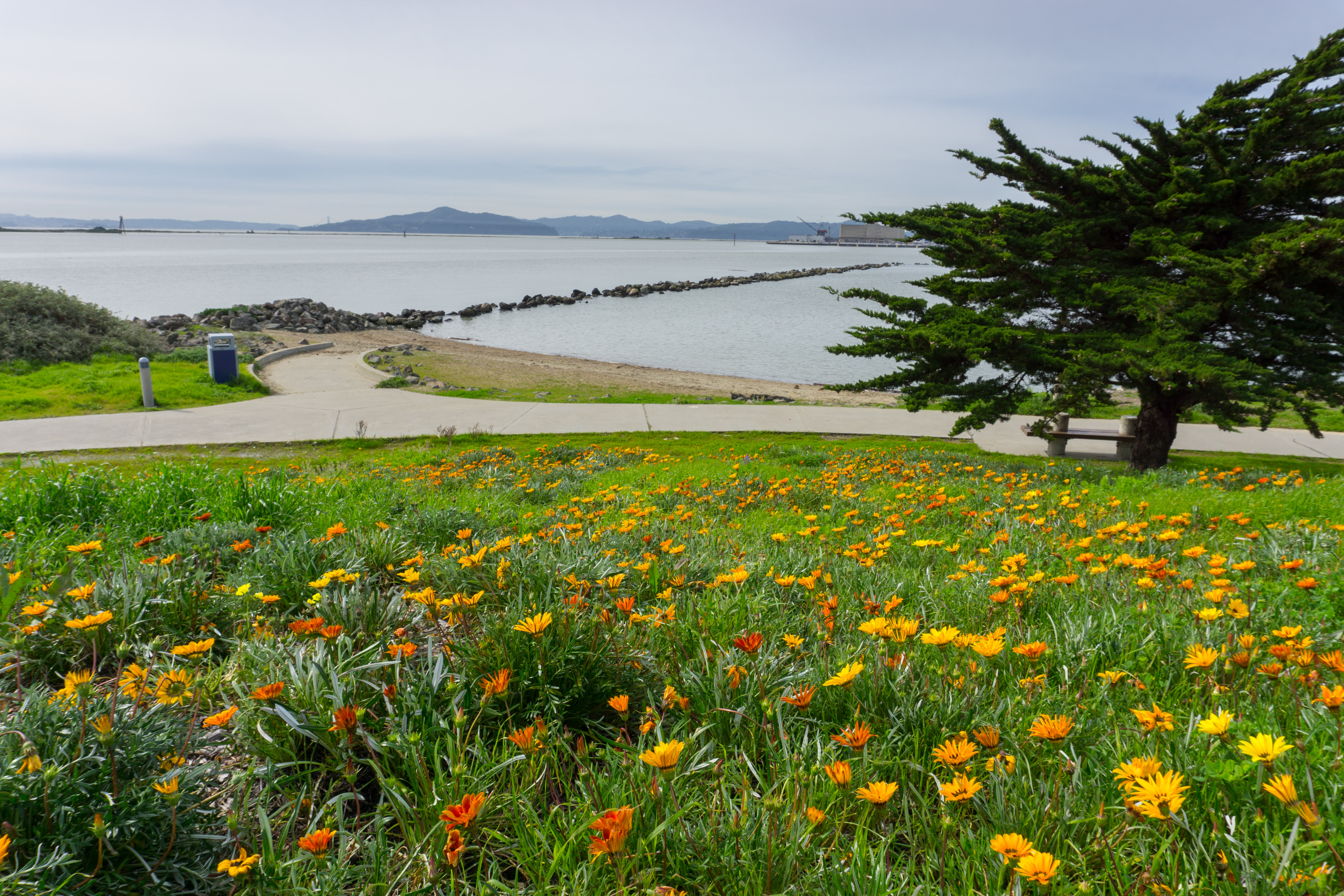 Orange flowers in bloom, paved path, bay in distance