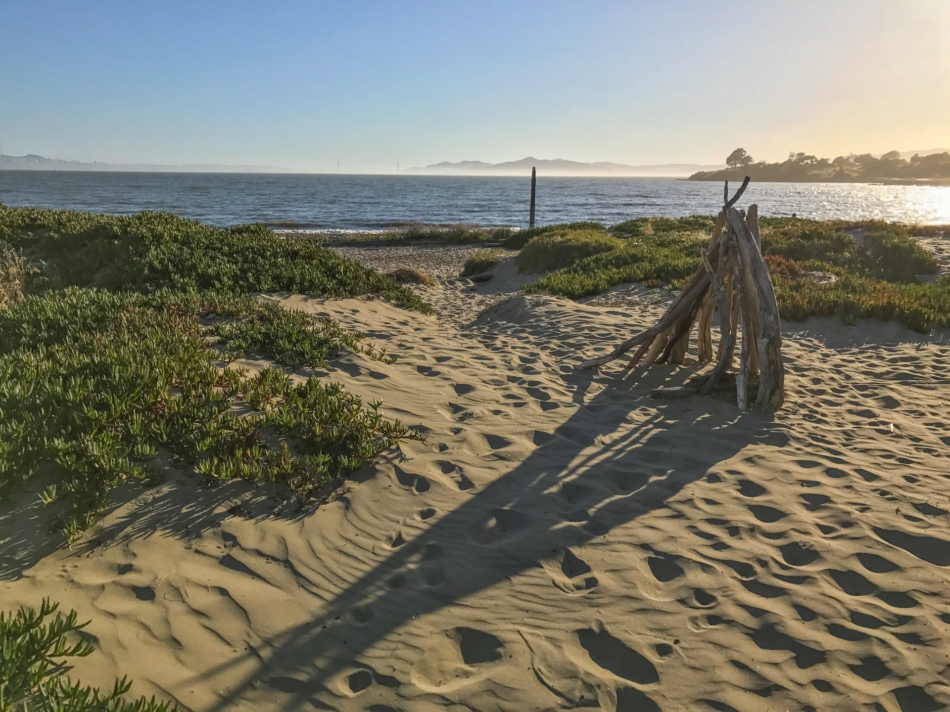 evening light on a driftwood sculpture casts long shadows over sandy beach and iceplant