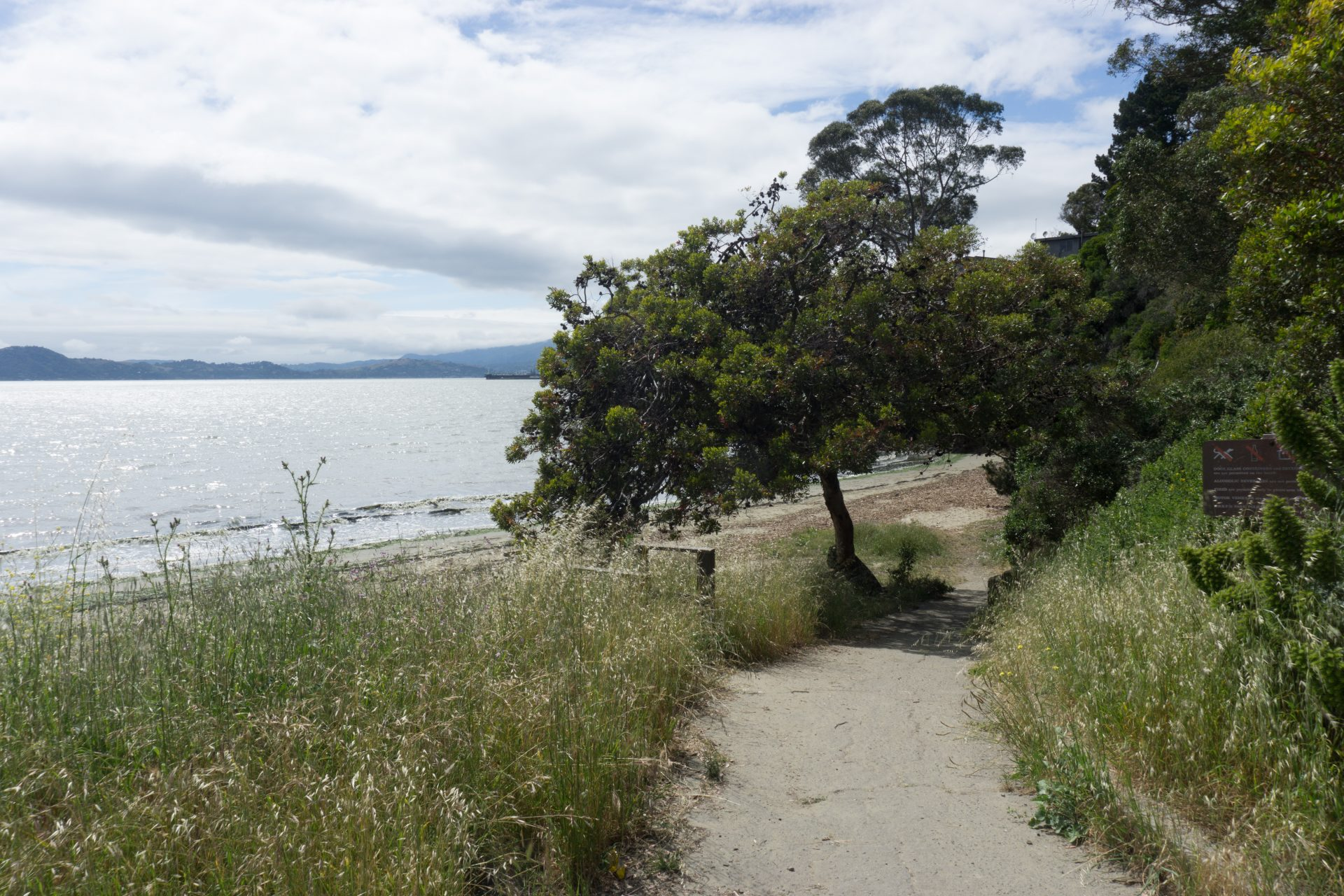 paved path down to beach with tall grasses on either side