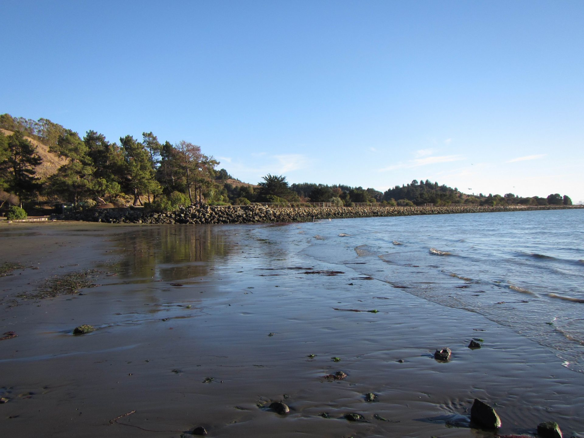 open wet beach with riprap and trees in distance