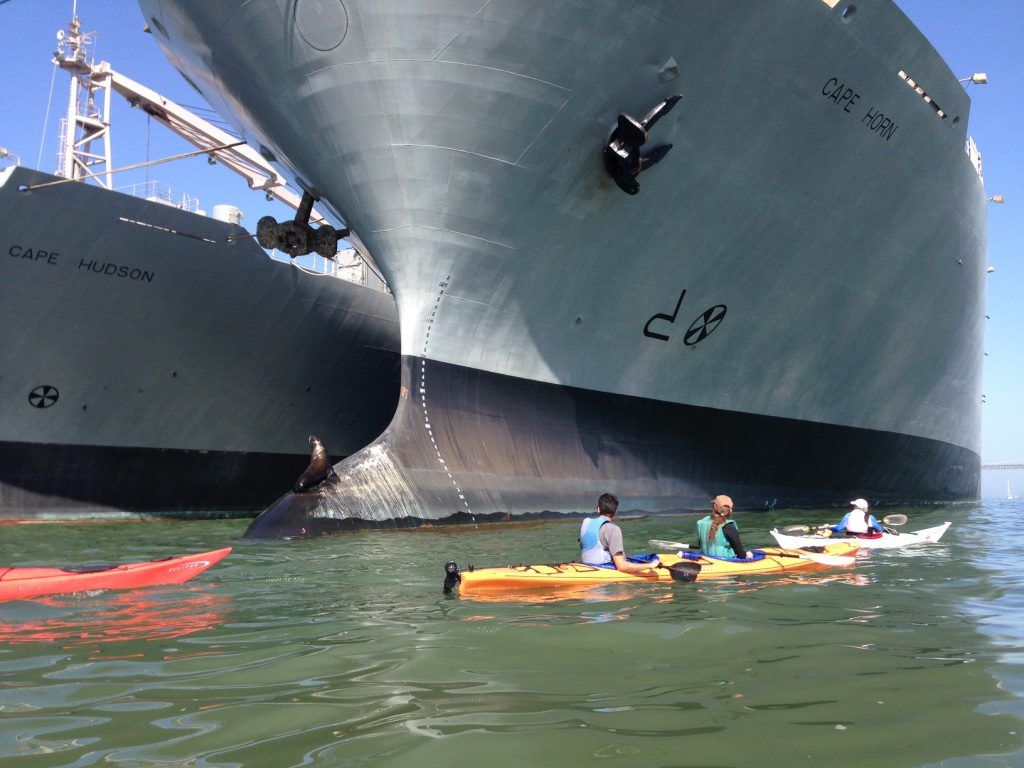 Group of kayakers very near the bow of a large ship called the Cape Horn, with the Cape Hudson on left