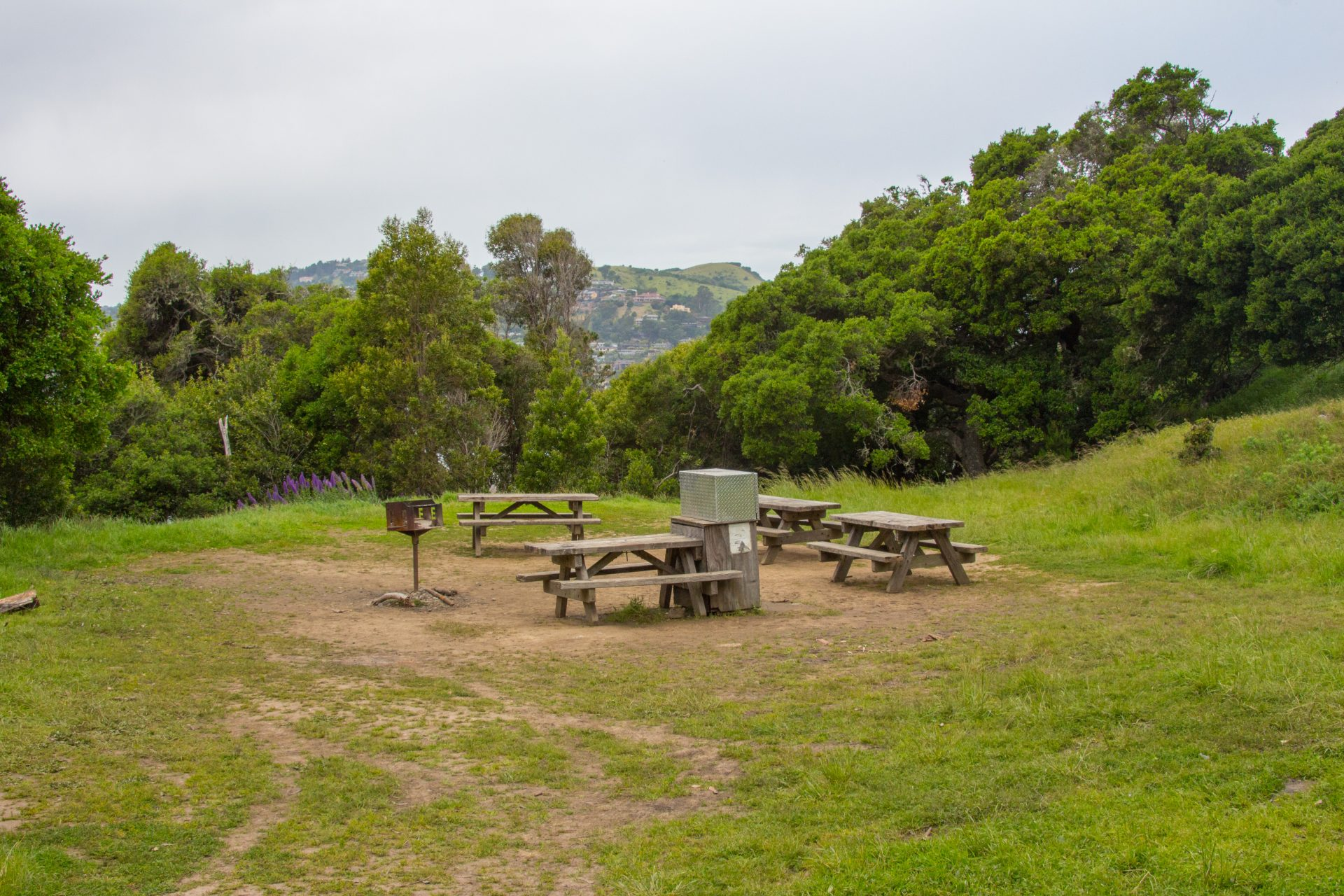 four picnic tables, barbecue, metal food cabinet