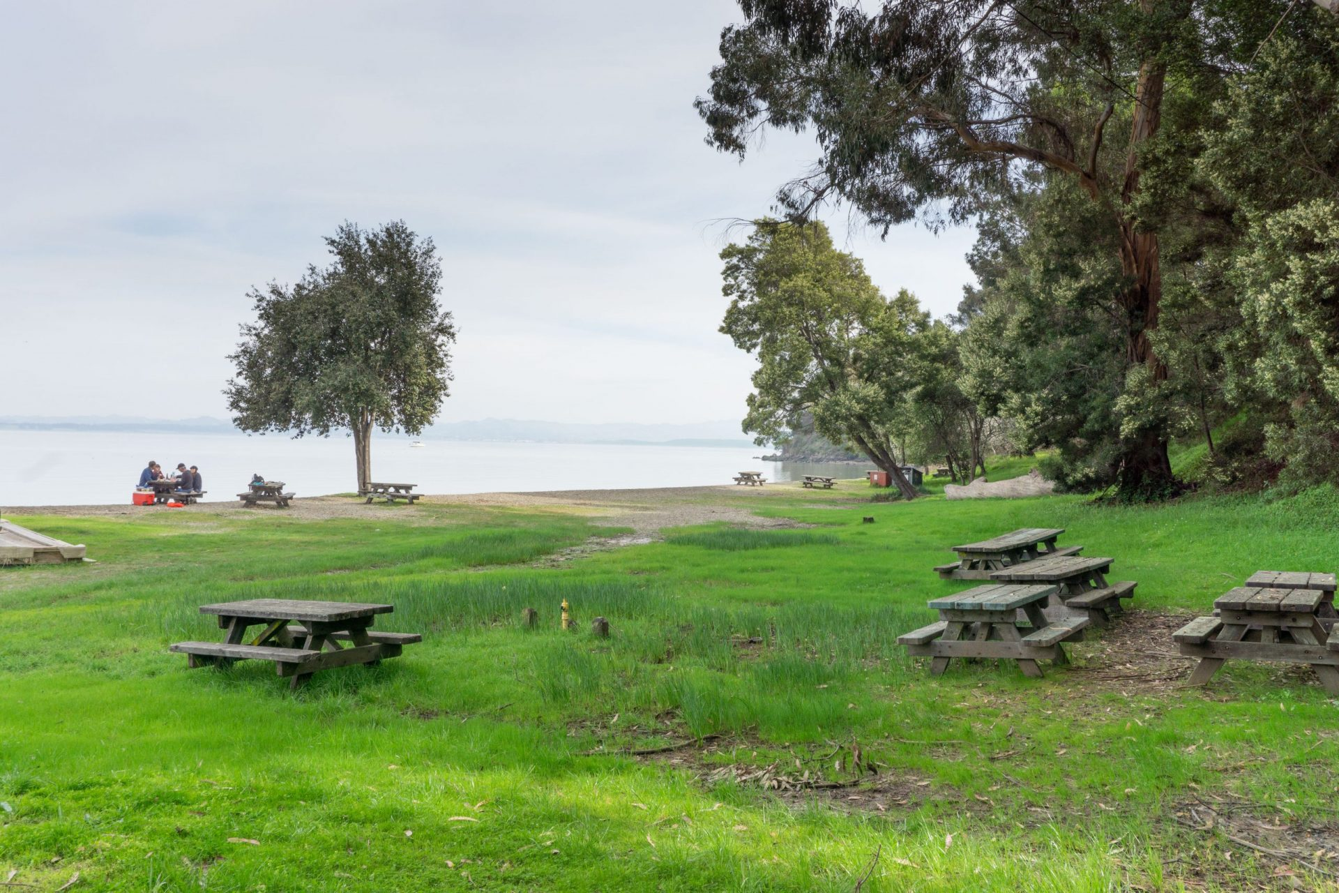green lawn with picnic benches