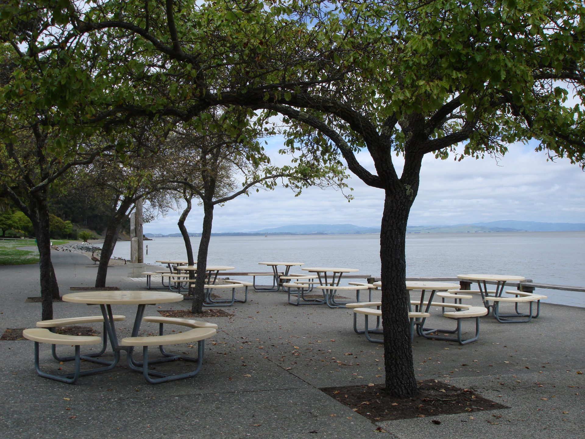 8 round picnic tables under small shade trees