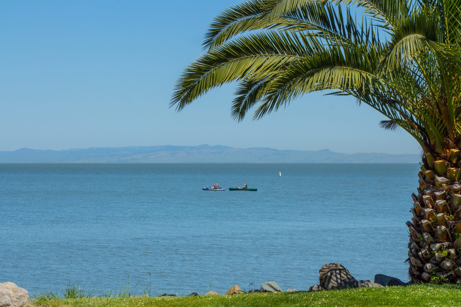 palm tree framing view of the bay, with kayakers in distance