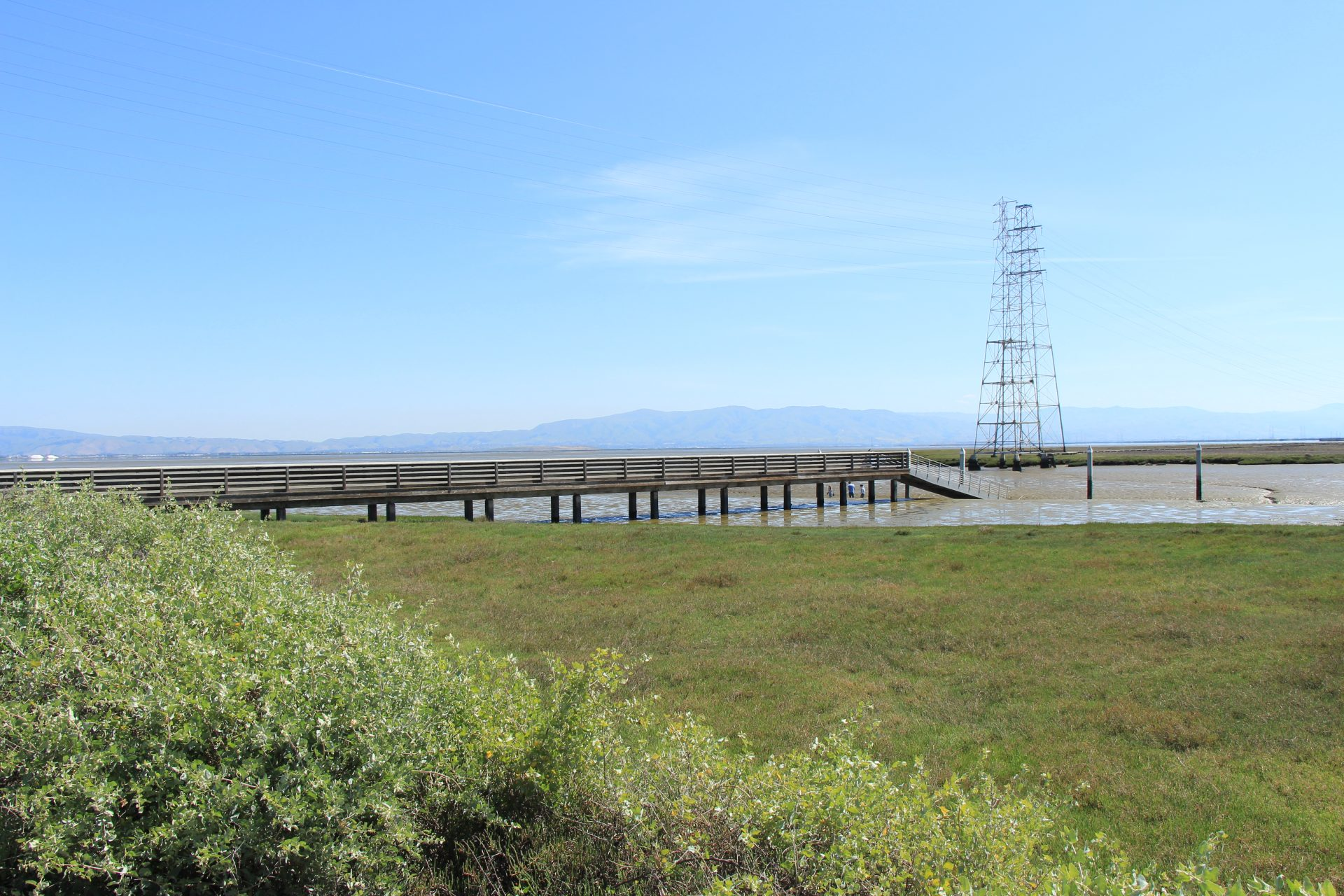 marsh grasses with a wooden boardwalk extending out to water