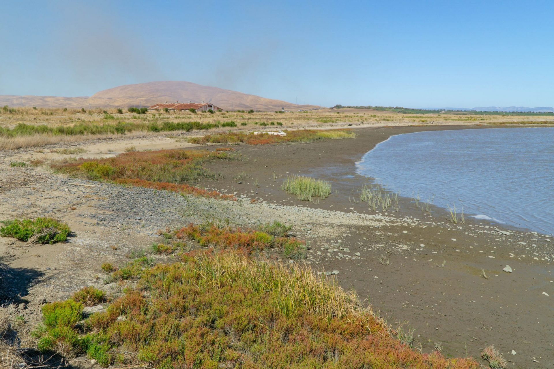 red, brown, green marsh plants and beach with golden hill in background