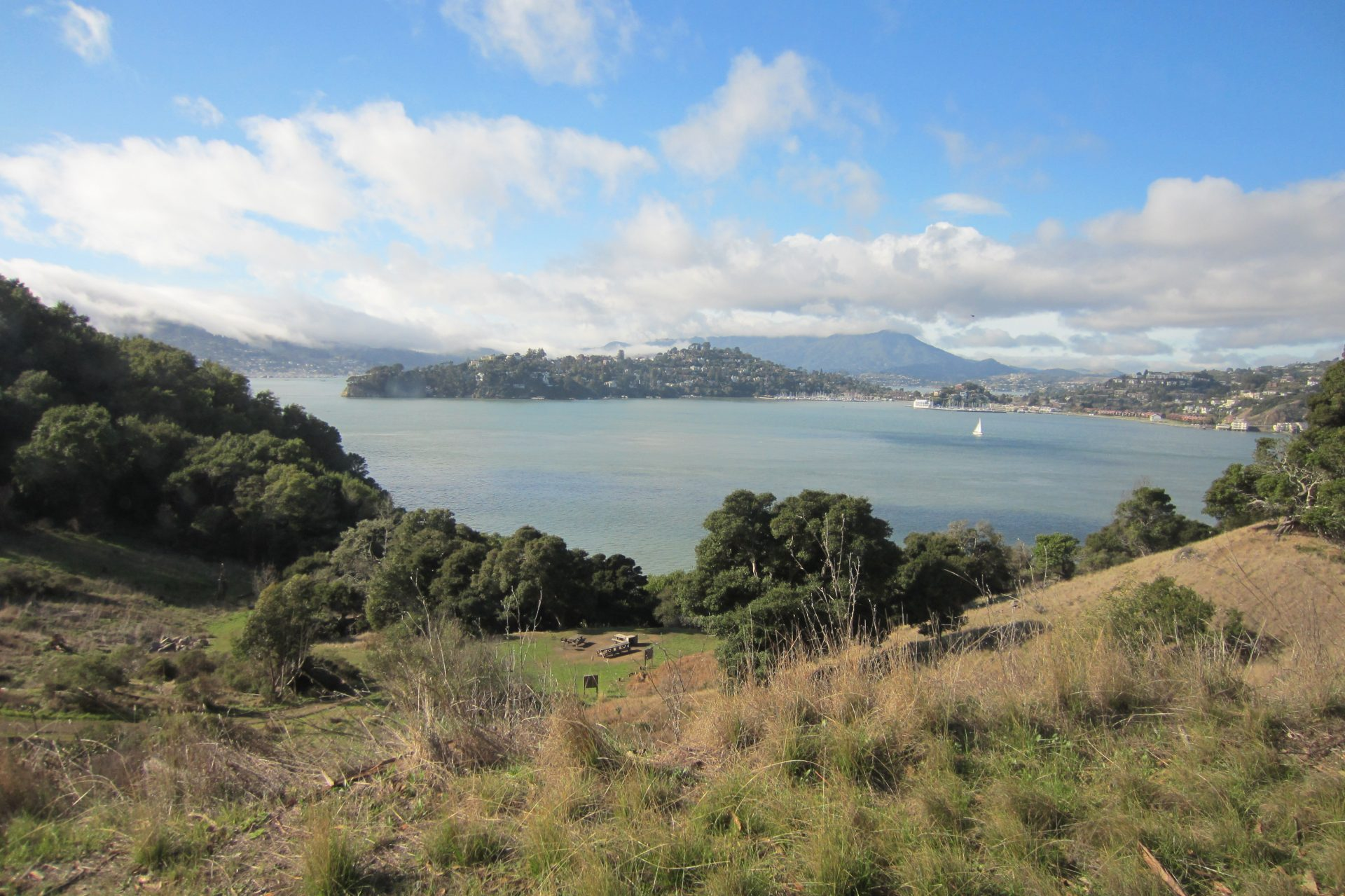 view from hills through trees to bay, Tiburon and Mt Tamalpais beyond