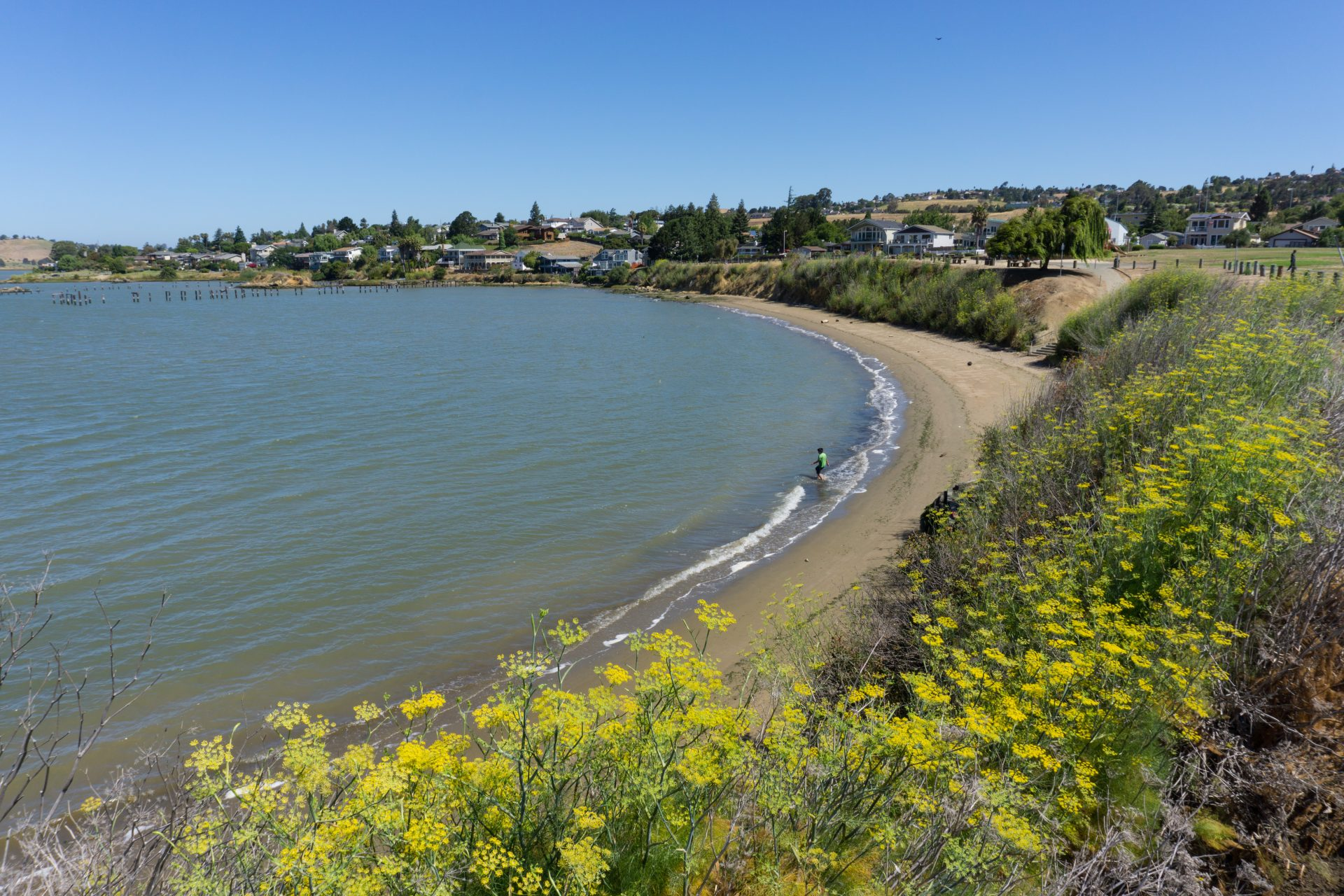yelow flowers foreground, one person on sandy beach mmiddle, houses and hills in distance