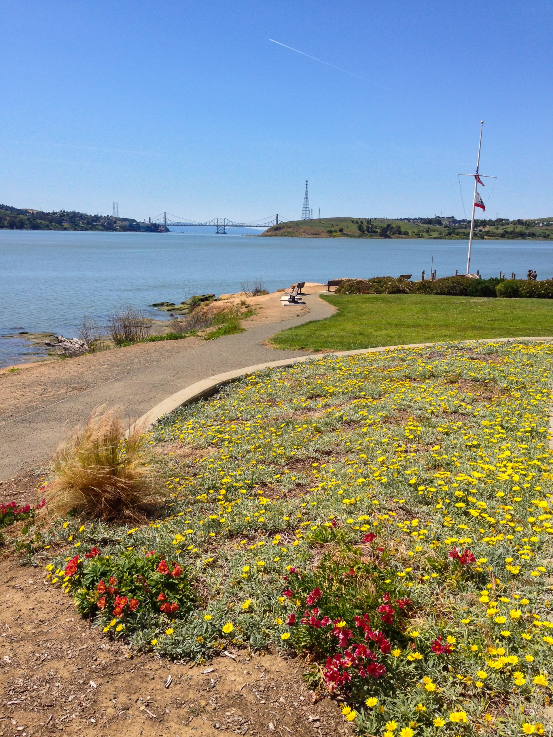 yellow flowers, path and bay beyond