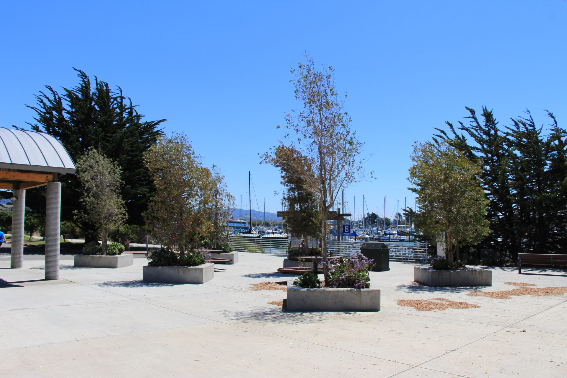 paved plaza with trees set in raised concrete planter areas