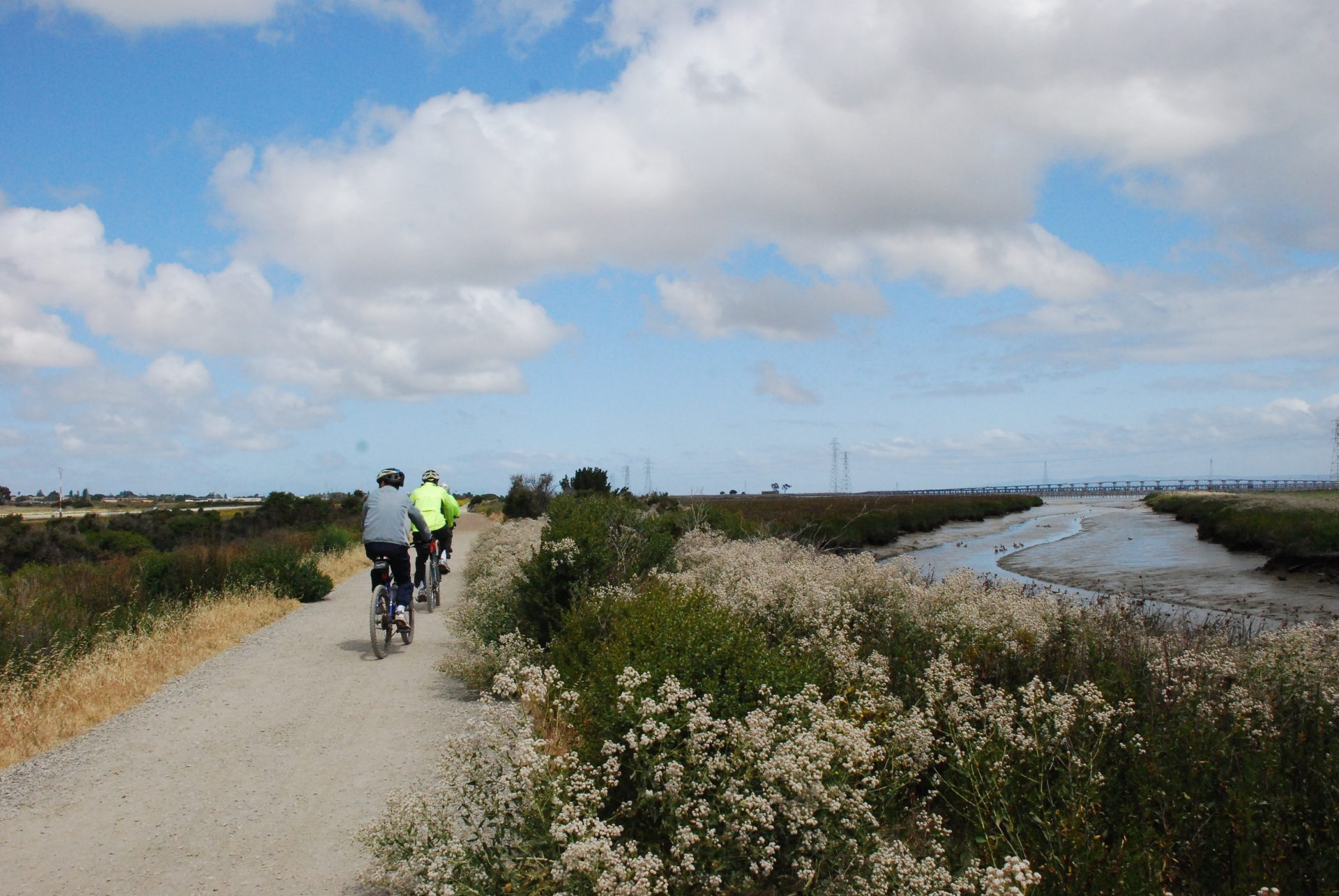 Two bicyclists ride on gravel path, with blooming shrubs in foreground