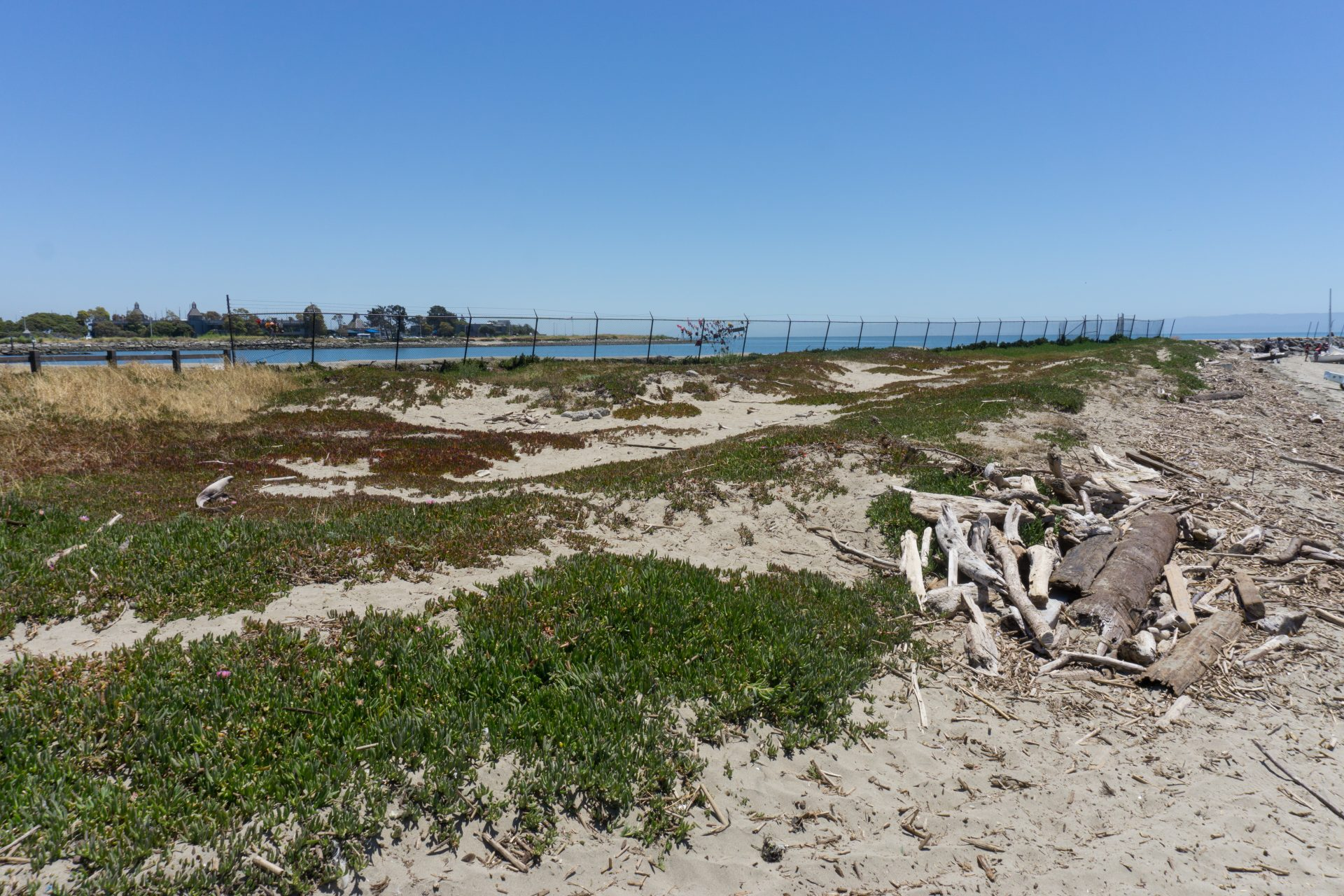 iceplant-covered dunes, driftwood on beach, chainlink fence in distance