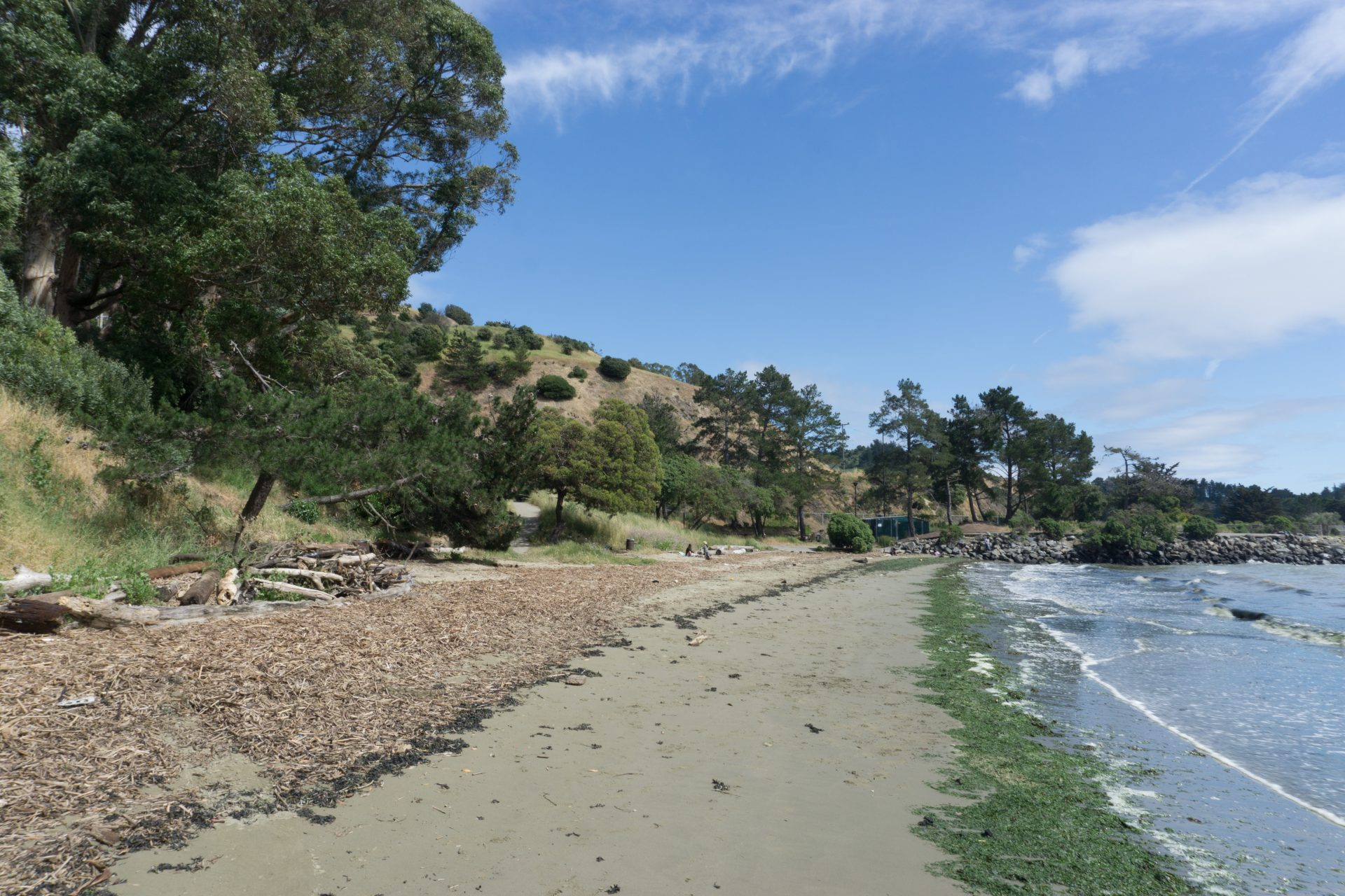 Looking up beach with brown beach wrack on left, green algae on right