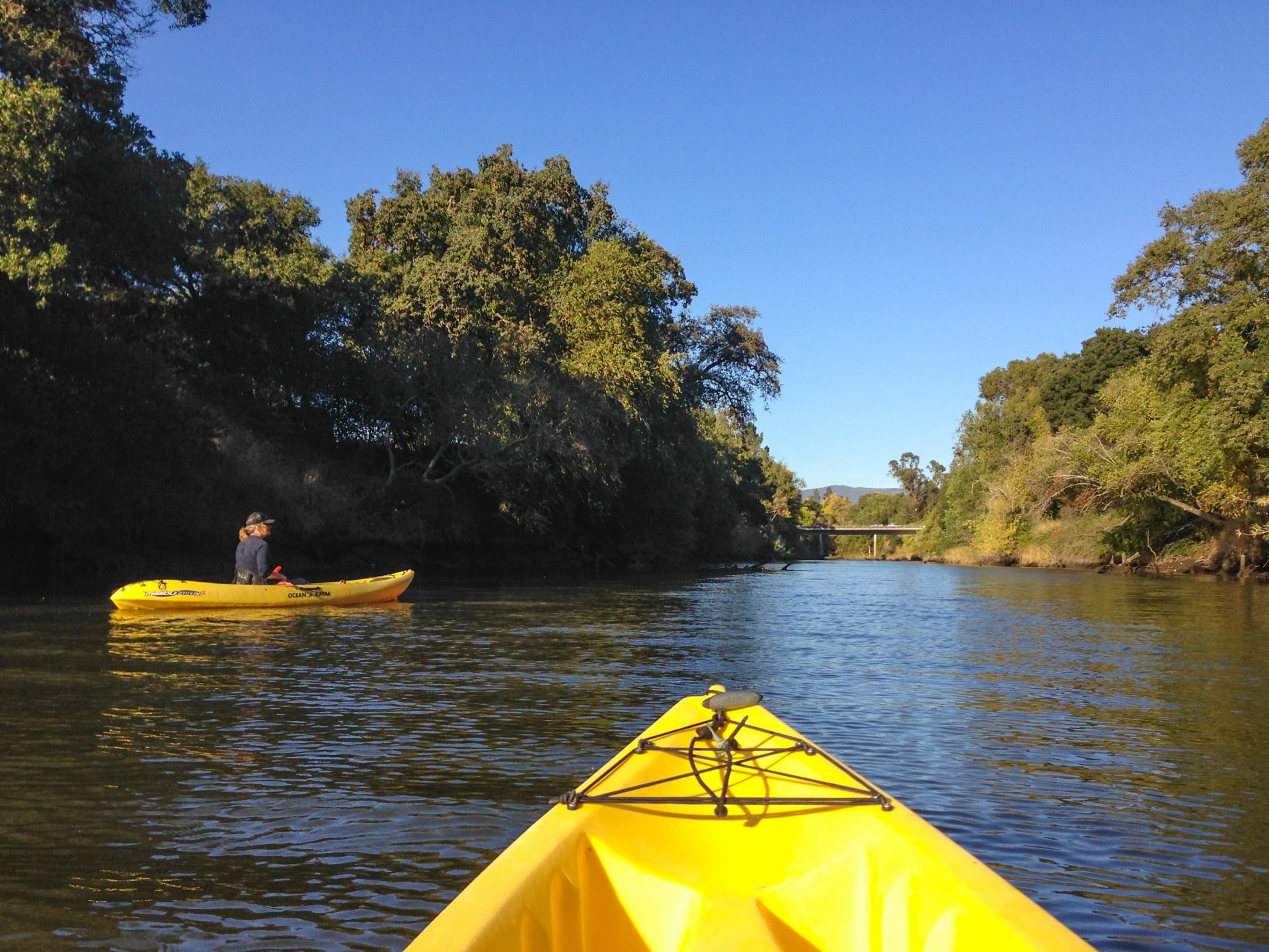 Kayak-level view of river channel with trees hanging over both sides, and one other kayaker in distance