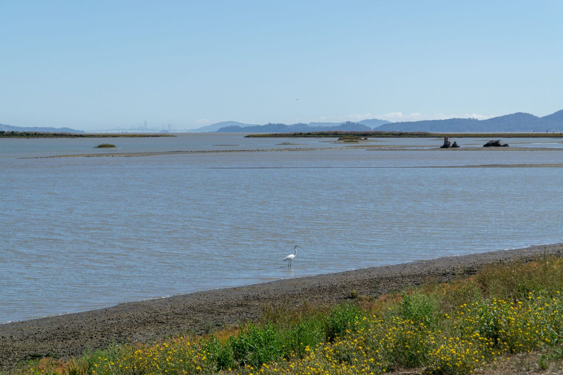 Still bay waters, green marsh in foreground